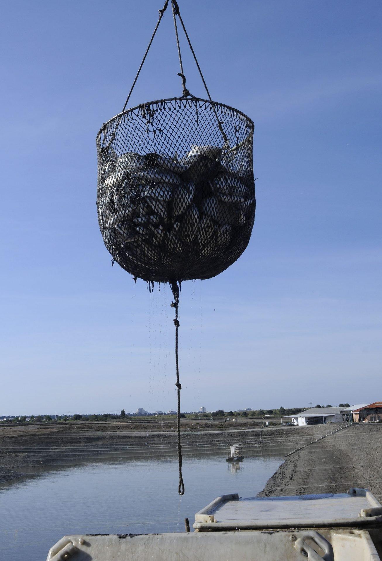 Atlantik Fish | Pesca