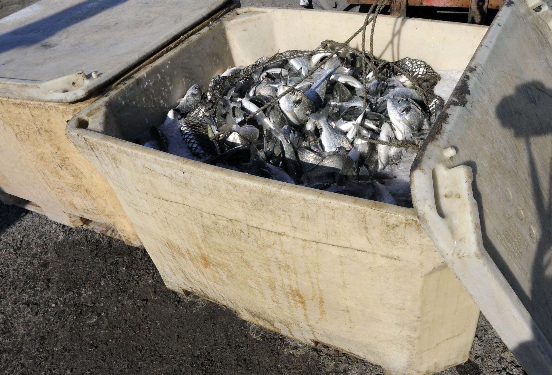 Atlantik Fish | Acondicionamento do Pescado
